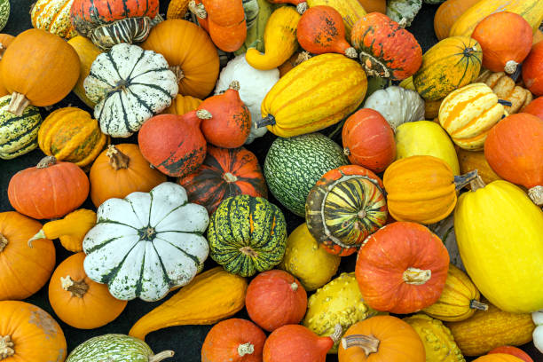 pumpkins  - 조롱박과 식물 뉴스 사진 이미지