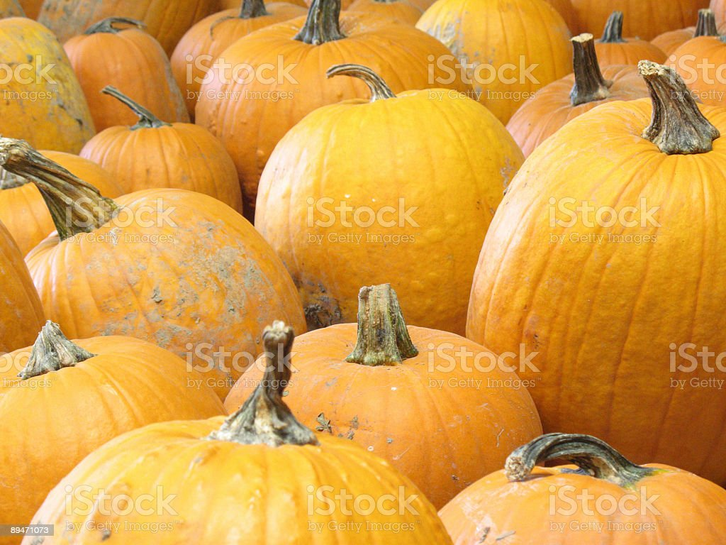 Pumpkins royalty-free stock photo