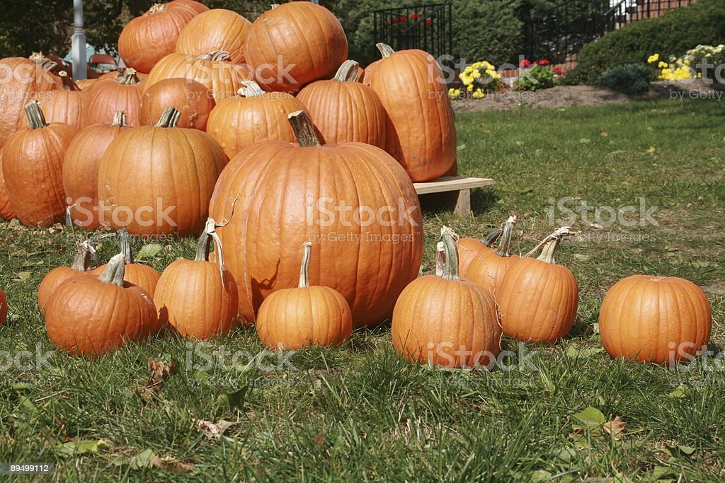 Pumpkins royaltyfri bildbanksbilder