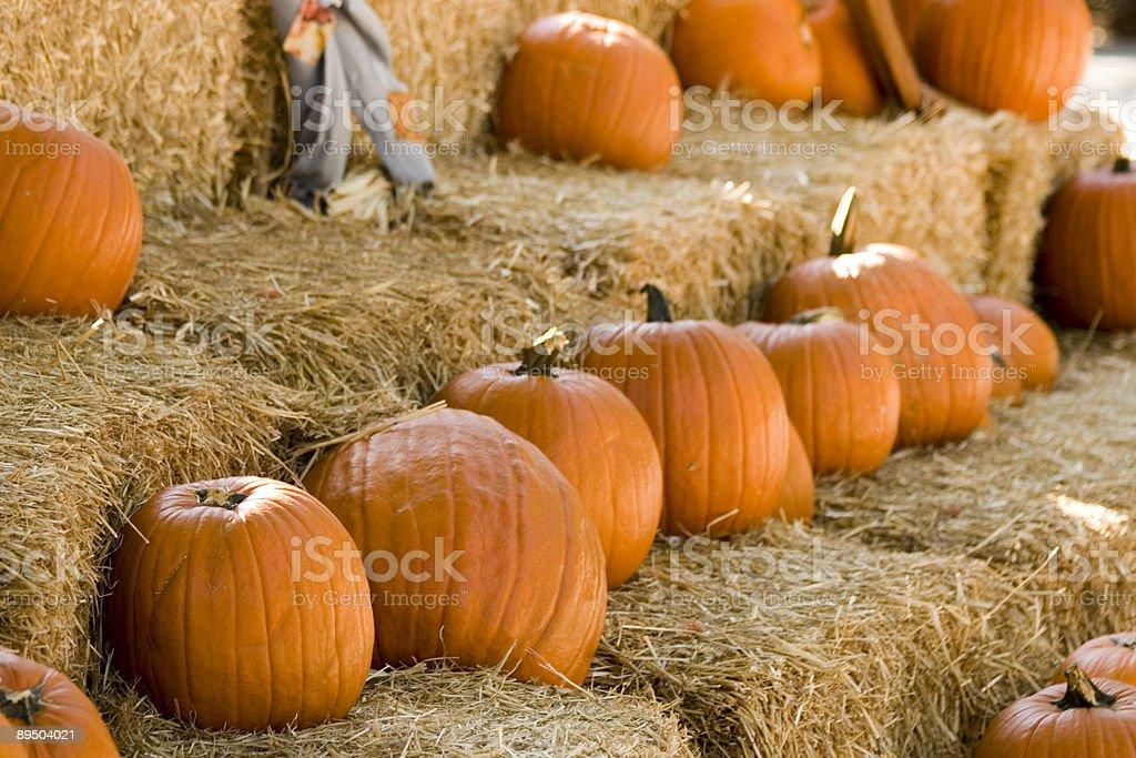Pumpkins royalty free stockfoto