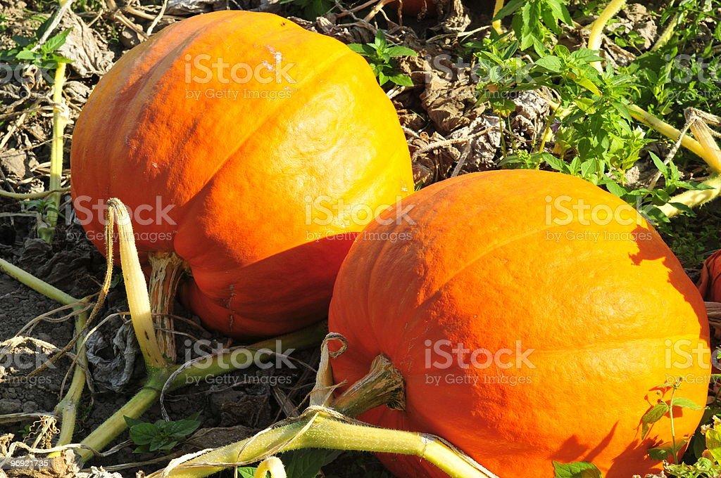 Pumpkins. royalty-free stock photo