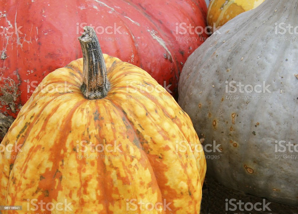 Pumpkins royalty-free 스톡 사진
