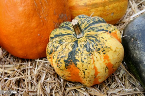 Pumpkins Stock Photo & More Pictures of Agriculture