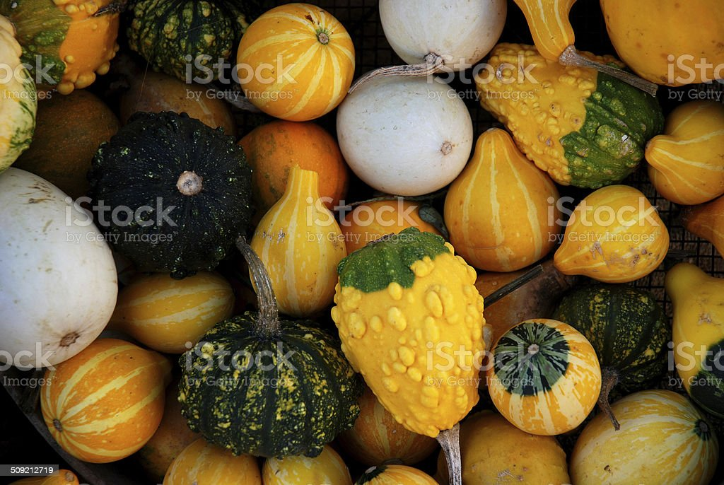 Pumpkins ready for halloween stock photo