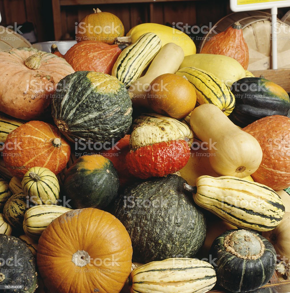 Pumpkins squash and gourds at harvest stock photo