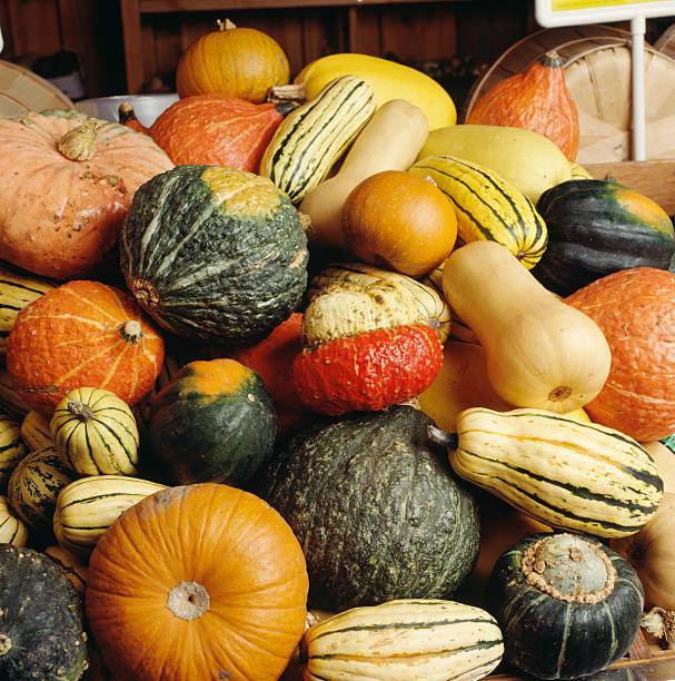 Kürbisse squash und gourds im harvest – Foto