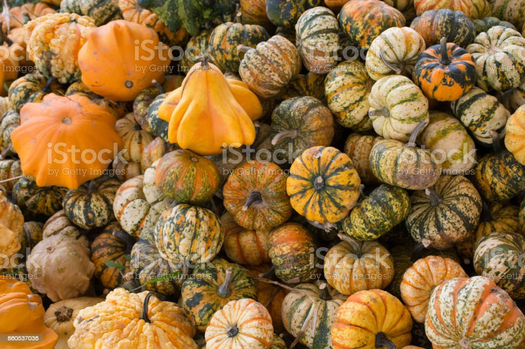 Pumpkins, Squash, and Gourds stock photo