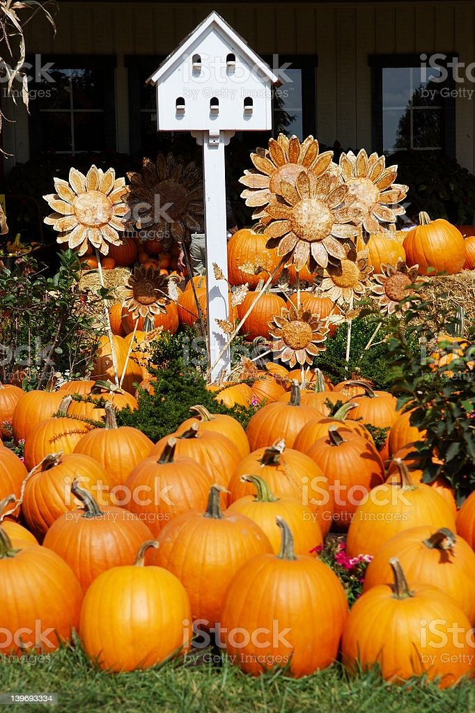 Pumpkins with Birdhouse and Sunflowers royalty-free stock photo