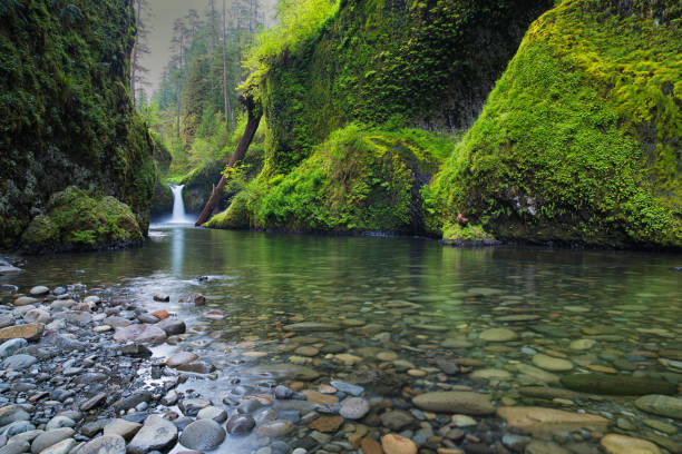Punch Bowl Falls and Greenery on Eagle Creek stock photo