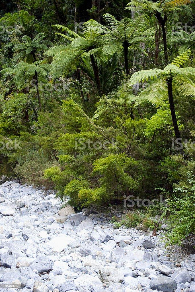 Punga Tree Ferns and Native Bush, New Zealand stock photo