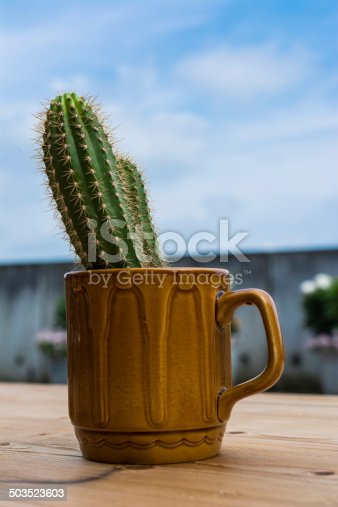 Cacti in a 70's coffee mug on a wooden table outside , picture lots of associations