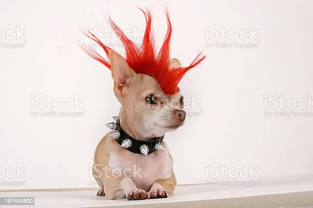 Punk picture id157404900?b=1&k=6&m=157404900&s=612x612&h=vrquu3rwa4o m2ksrzn mqtcxh37nkl0m7k7fdwqkg8=