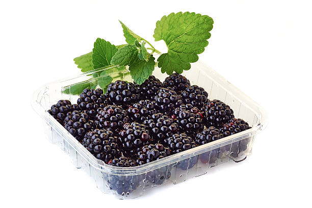 punnet of blackberries with mint branch on white A punnet of blackberries with mint branch isolated on white background fruit carton stock pictures, royalty-free photos & images