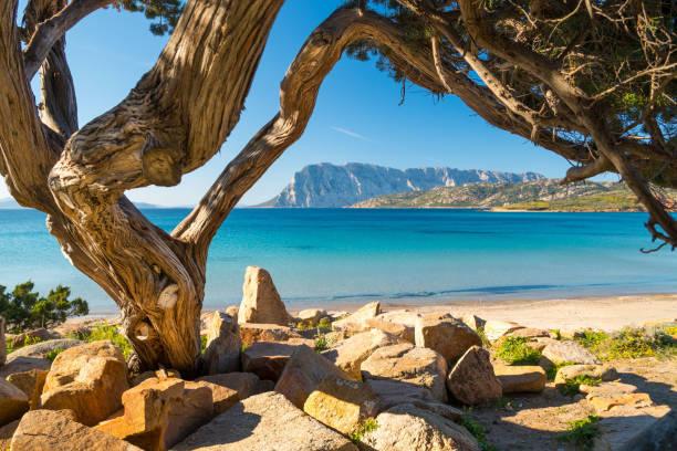 spiaggia di punta capo coda cavallo - san teodoro - sardegna foto e immagini stock