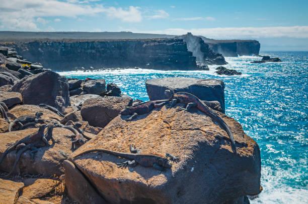 Punta Suarez Cliffs, Espanola Island, Ecuador stock photo
