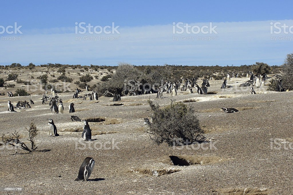 Punta Tombo, Argentina stock photo