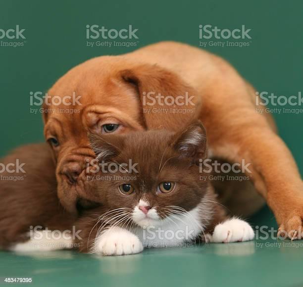 Pup and kitten picture id483479395?b=1&k=6&m=483479395&s=612x612&h=c4bh37kxgzlhz3xhzfwu7ynxq0jgxkgnkou2ptvraxa=
