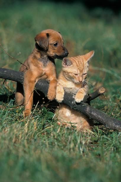 Pup and kitten standing on grass picture id1263318089?b=1&k=6&m=1263318089&s=612x612&w=0&h=8bizrj mqwpntpa2mqzdzxzl9fg1ico xhv28lpzf i=