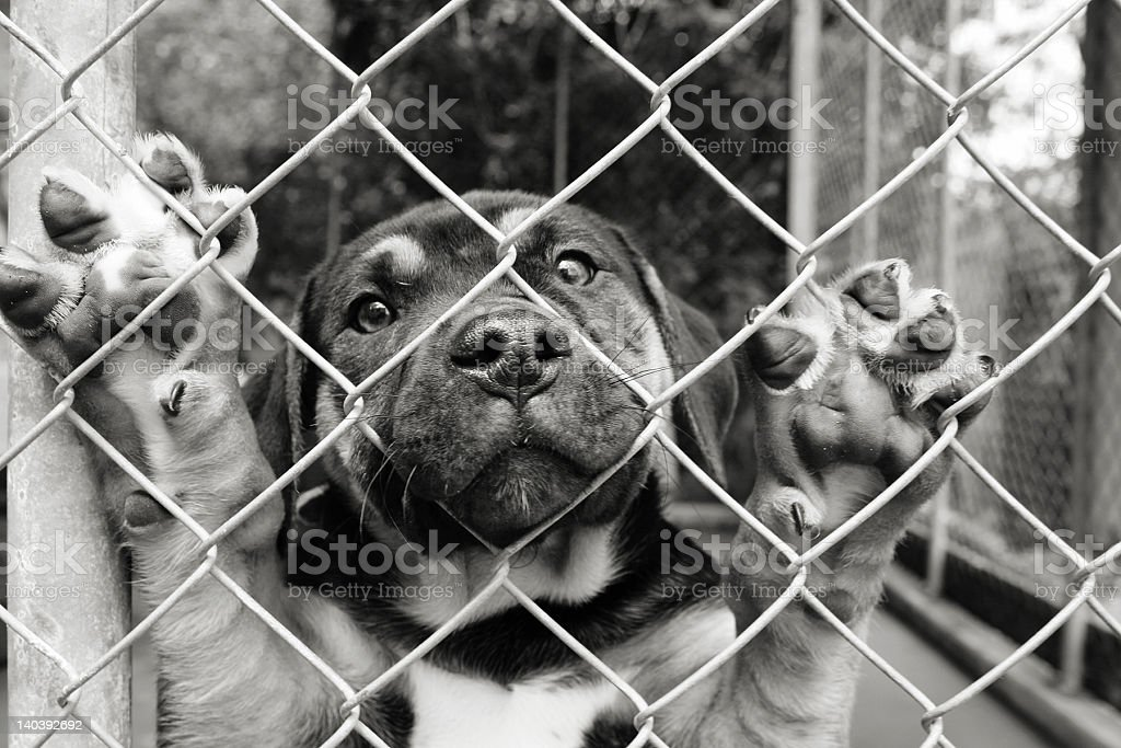Pup in a pen.....Look at me stock photo
