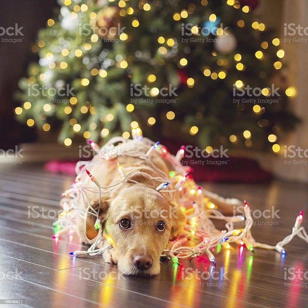 Filhote envolto em luzes de Natal - foto de acervo