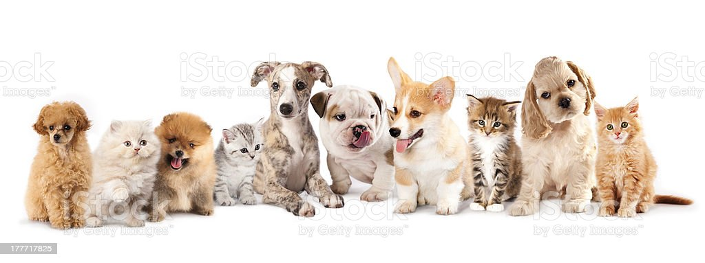 Puppies and  kitten royalty-free stock photo