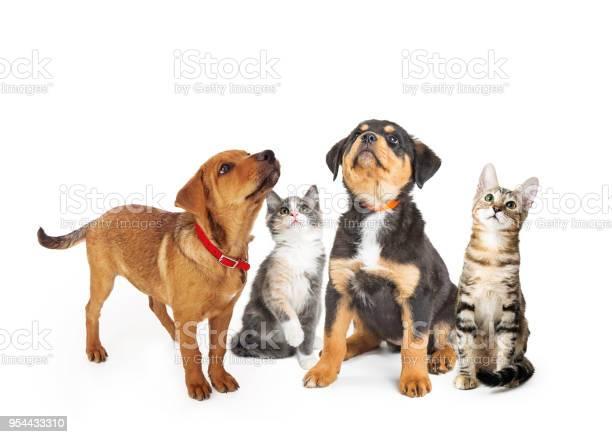 Puppies and kittens on white looking up picture id954433310?b=1&k=6&m=954433310&s=612x612&h=t h7hemvowz7ku1xk9wmqgdonzuudysedism0wynhkc=