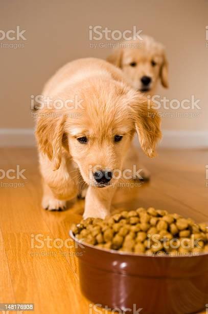 Puppies dinner time picture id148176938?b=1&k=6&m=148176938&s=612x612&h=zhxmywmxxfvkozzn6 2poflhgjkftlngnfmwntpa8wi=