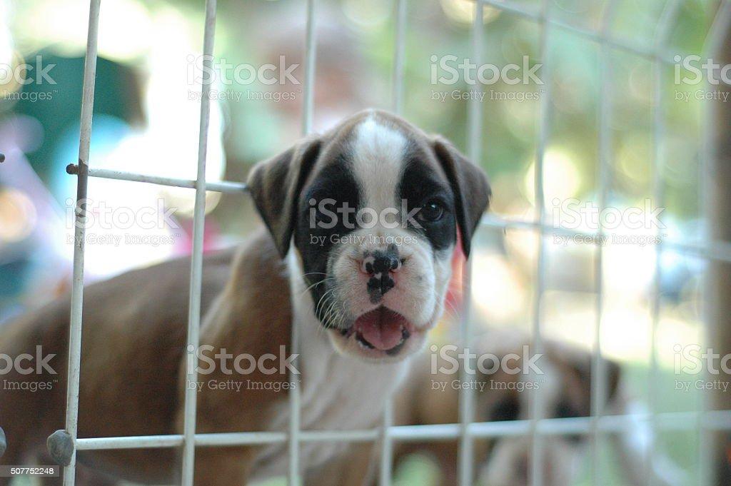 Puppies for Adoption stock photo