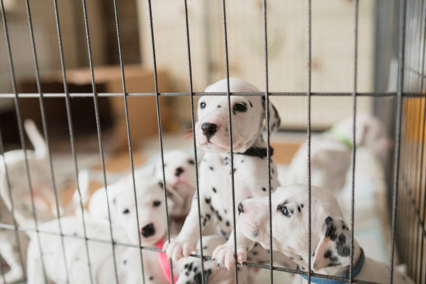 puppies in a playpen - playpen stock pictures, royalty-free photos & images