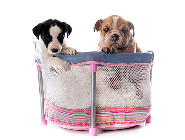 puppies in pen - playpen stock pictures, royalty-free photos & images