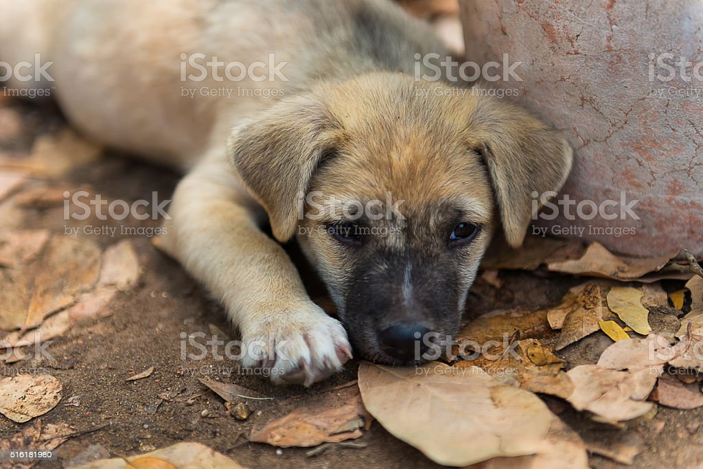 Puppies living in the temple.In Thailand. stock photo