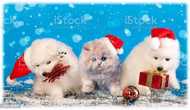 Puppies white wearing a santa hat and kitten picture id454290501?b=1&k=6&m=454290501&s=612x612&h=cq8kvl6wvlbrcxhgbxpmityasjlafrisr5cbopryr4q=