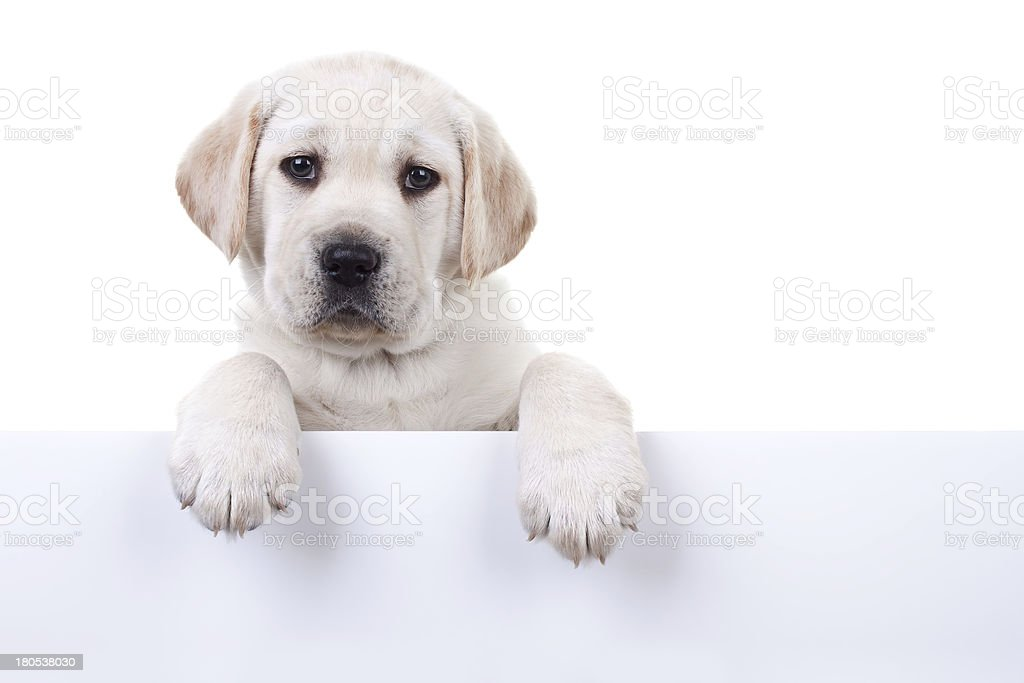 Puppy Above Banner stock photo