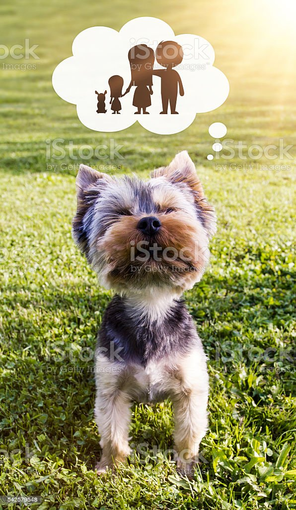 Puppy and adoption concept stock photo