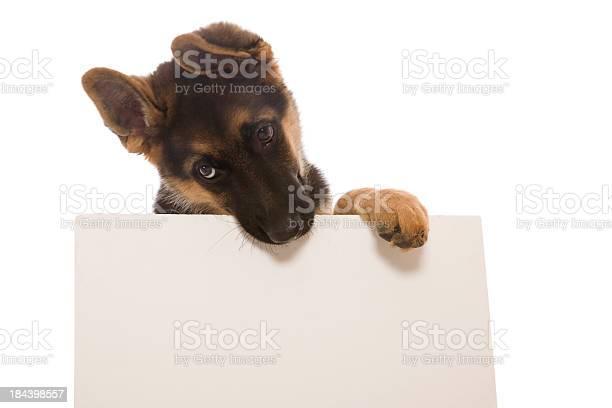 Puppy and blank card picture id184398557?b=1&k=6&m=184398557&s=612x612&h=d jsfy4l0zyhuxtgaim3tp8xi3cvt5kaoyqkyy frjc=