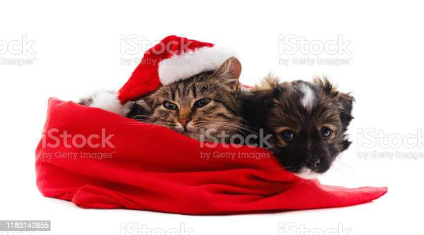 Puppy and cat in christmas bag picture id1183142655?b=1&k=6&m=1183142655&s=612x612&h=qv6mrlv7wo2spxcoox6rtx4ye9hwp0liapgwwmdxyyq=