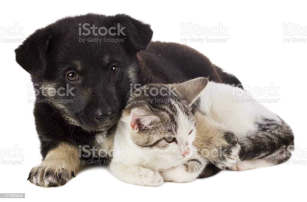 puppy and cat royalty-free stock photo