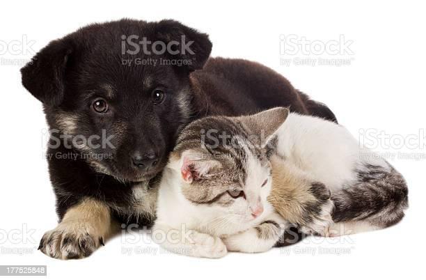 Puppy and cat picture id177525848?b=1&k=6&m=177525848&s=612x612&h=1lhknk0j8kphrmzfredelfnh4a4nd66sj66dkk qnzi=