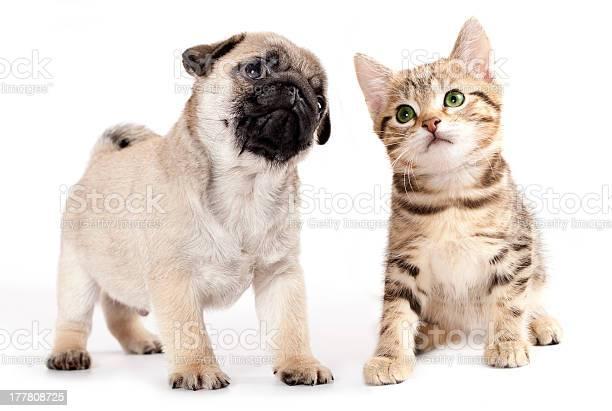 Puppy and cat picture id177808725?b=1&k=6&m=177808725&s=612x612&h=nfftb28szitfewx kl3nctdskznesga3zatqjnos4lg=