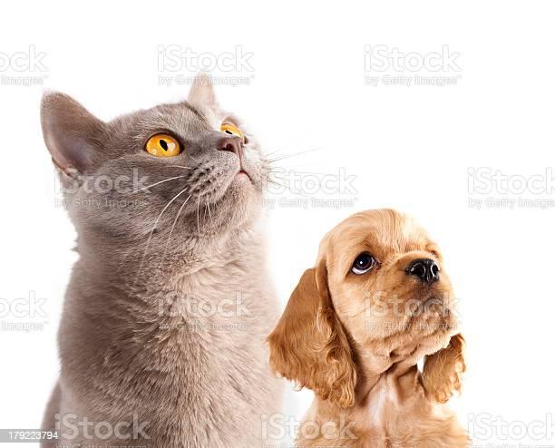 Puppy and cat picture id179223794?b=1&k=6&m=179223794&s=612x612&h=xbrf0x1anvjiviqaepgbq4dozkgzcqhqha  3nhgpoc=