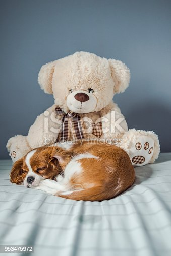 942206906 istock photo puppy and his fluffy friend 953475972