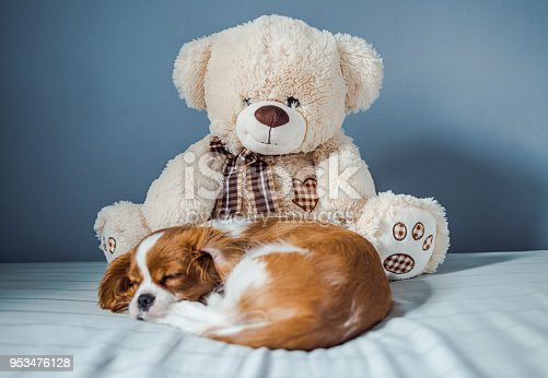 942206906 istock photo puppy and his fluffy friend 953476128