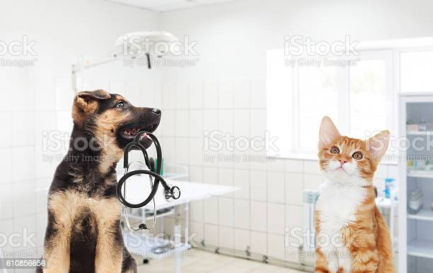 Puppy and kitten and a stethoscope in the veterinary clinic picture id610856656?b=1&k=6&m=610856656&s=612x612&h=fo75kidlquvvrc7r9qlnd7ximahc4gk2ob7enar5oui=