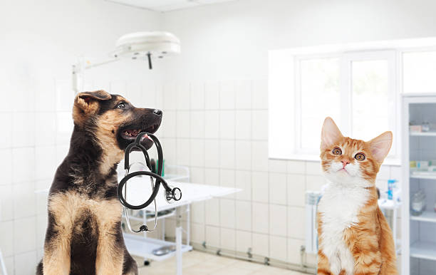 Puppy and kitten and a stethoscope in the veterinary clinic – Foto