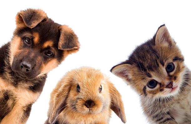 Welpen und Kätzchen und Kaninchen – Foto