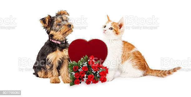 Puppy and kitten celebrating valentines day picture id507299080?b=1&k=6&m=507299080&s=612x612&h=znyopwotfjsoabxxlal tybekkugwyk8nrcuezvzkbe=