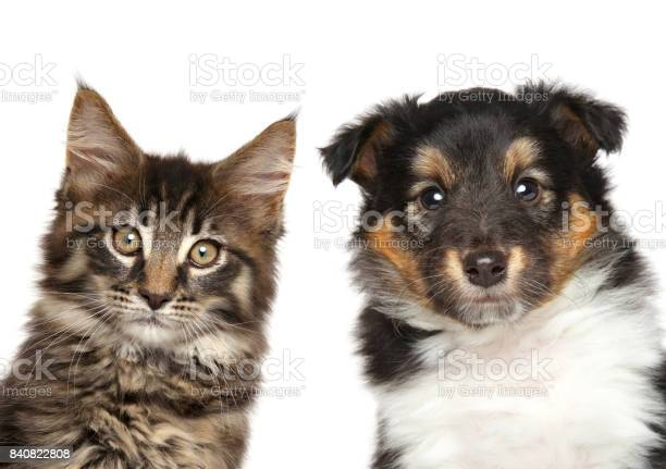 Puppy and kitten closeup portrait picture id840822808?b=1&k=6&m=840822808&s=612x612&h=0h1phjhfack2pz3r6mgqevuqnjctqke2qwvactkm7uu=