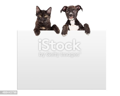 istock Puppy and Kitten Hanging Over Sign 468443798