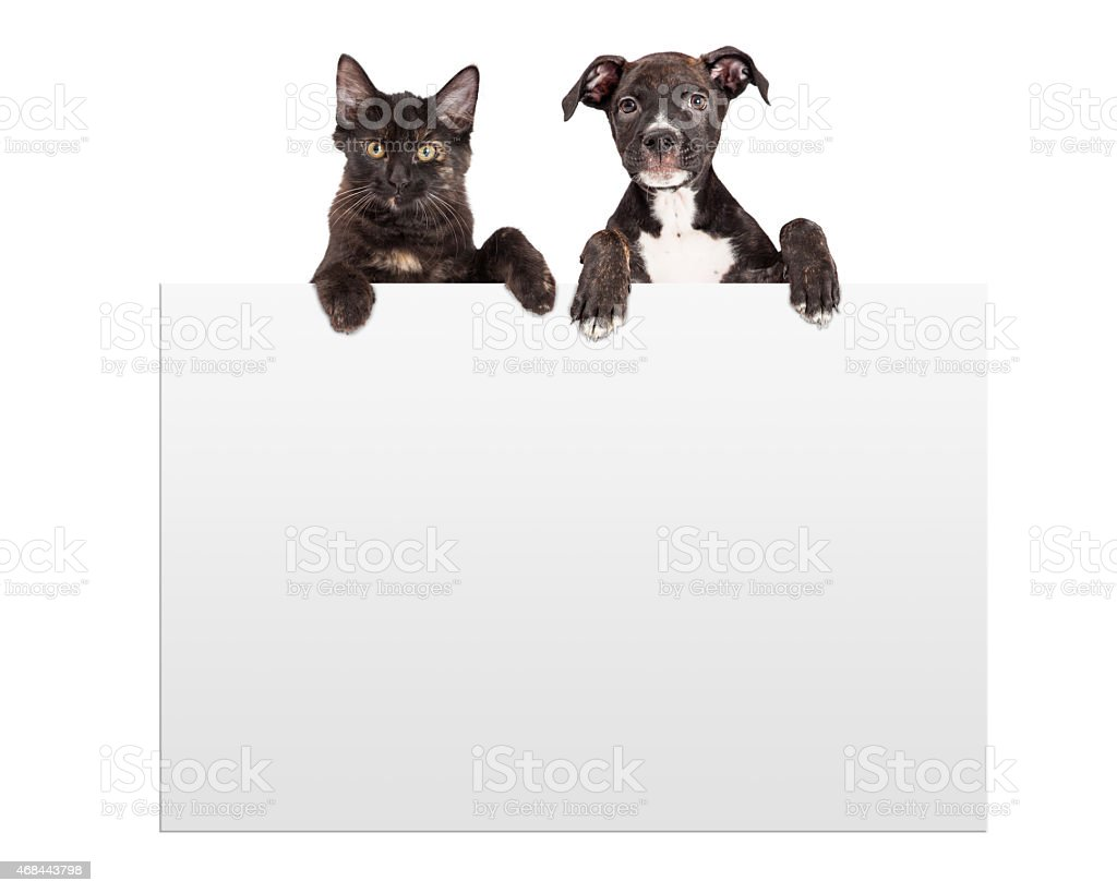 Puppy and Kitten Hanging Over Sign stock photo