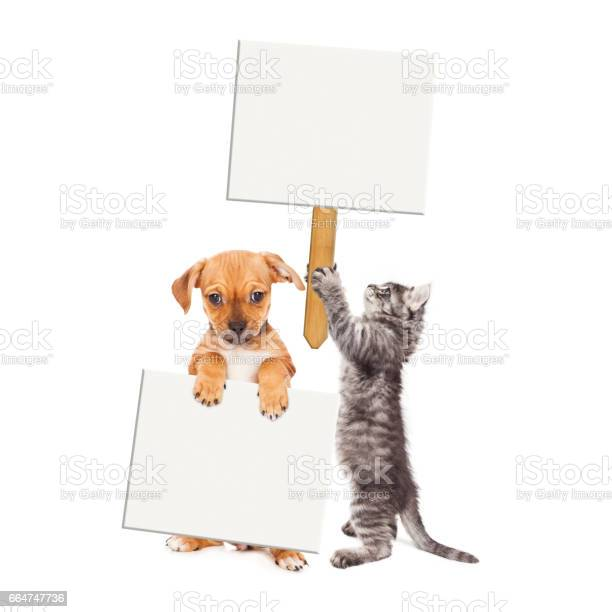 Puppy and kitten holding blank signs picture id664747736?b=1&k=6&m=664747736&s=612x612&h=j7bowjryerim33x5pq9t hnf9hszwf04uti9cyz9hiq=